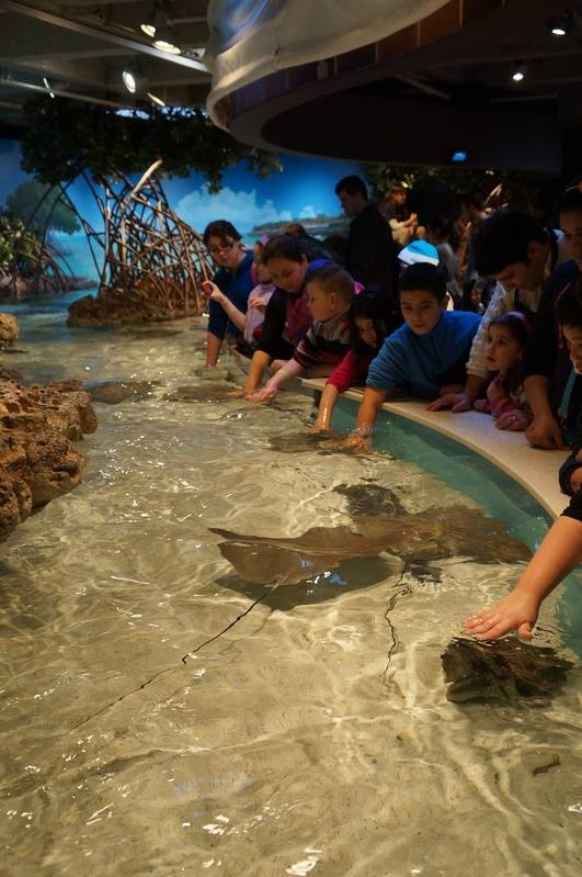 Shark & Ray Touch Tank