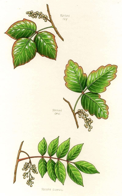 Poison Leaves