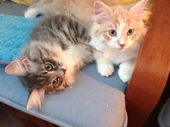Sami and Jackson.