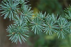 Trees can effectively be used to keep a house warmer in the winter and cooler in the summer.