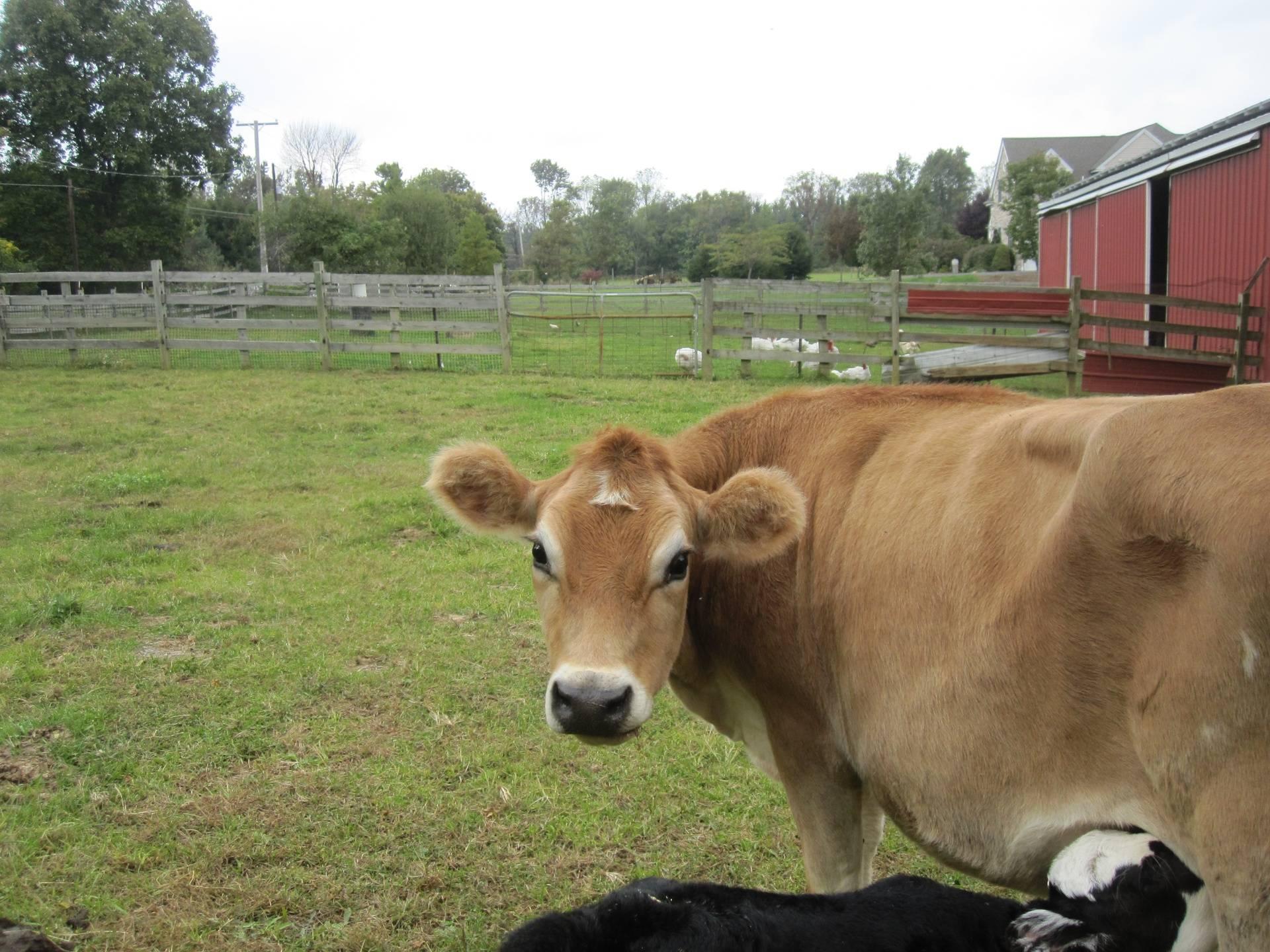 Jaklamas Farmstand, 260 Myler Road, Bloomsbury, NJ, 08804, USA