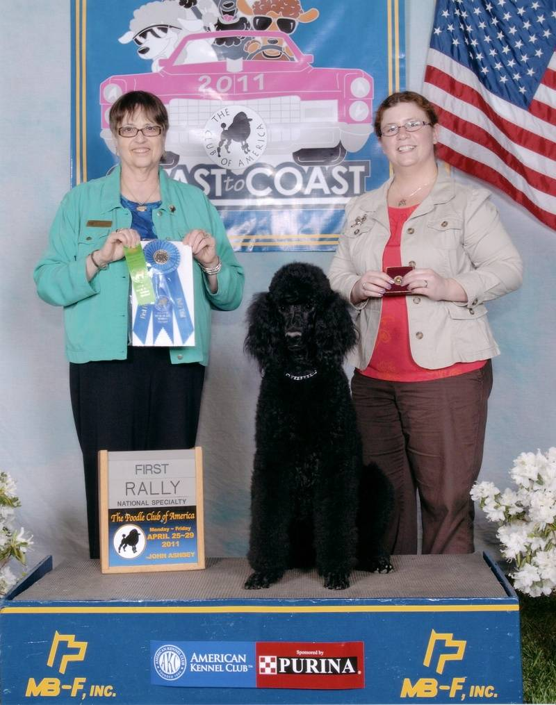 Pepper winning first place in Rally Advance A and earning her second leg at PCA National Specialty.  4/26/11.