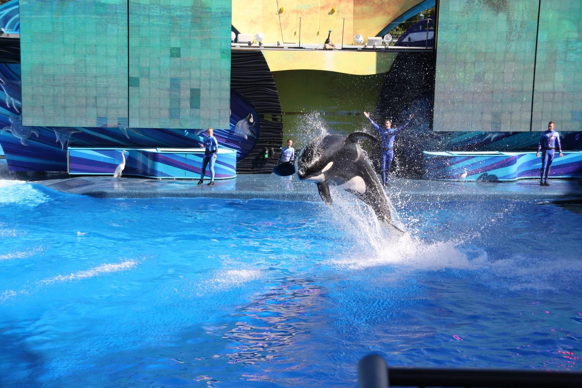 Orca - Seaworld, Orlando FL