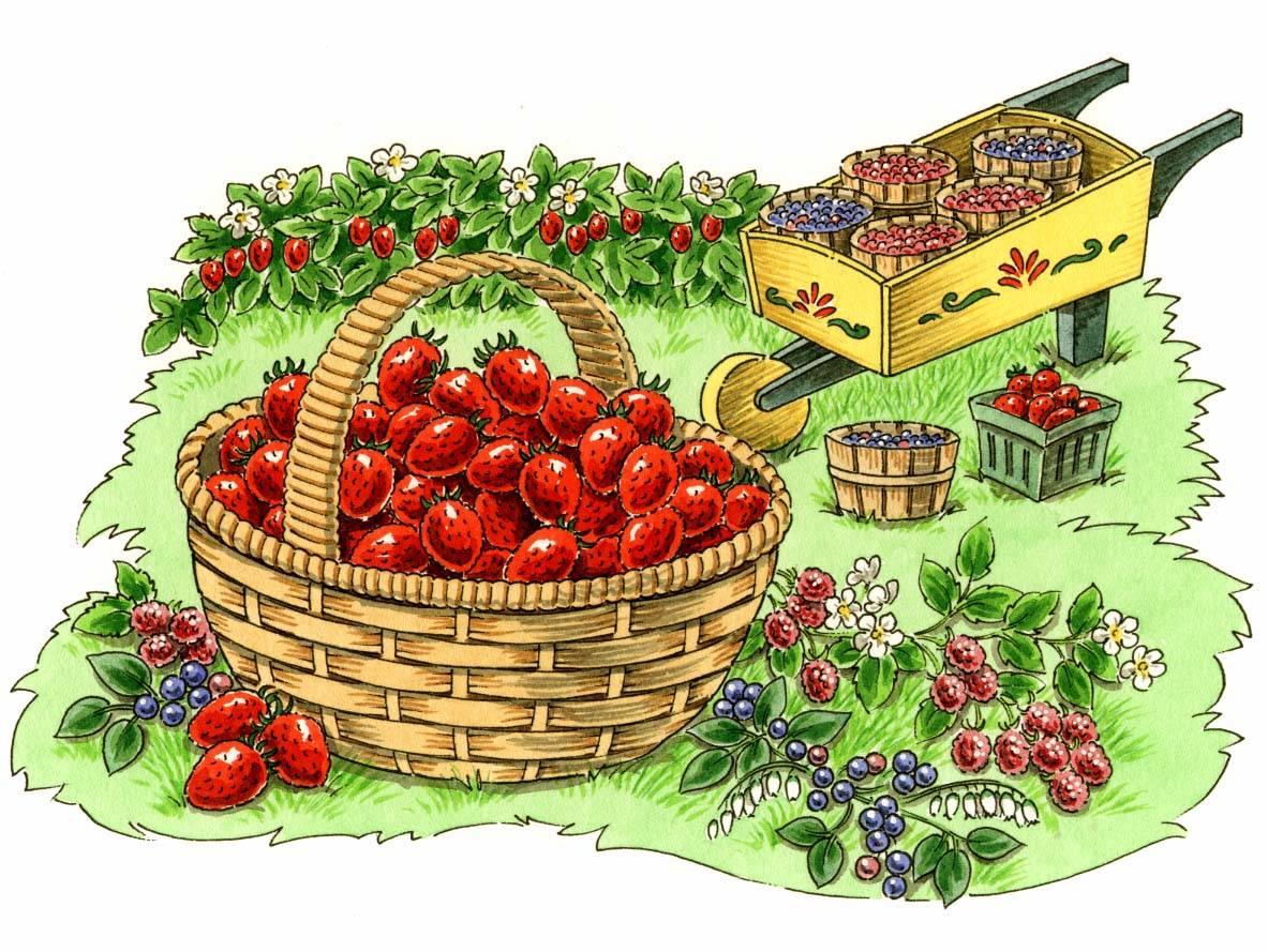 OFA Garden Fresh Cookbook