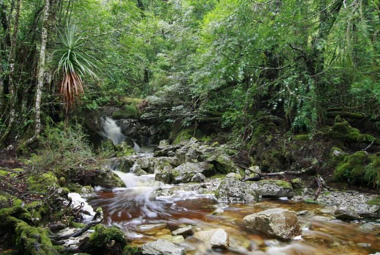 Plateau Creek at Cradle Mountain