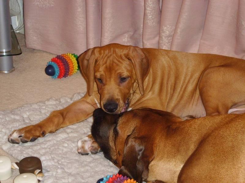 Remus & Zeus