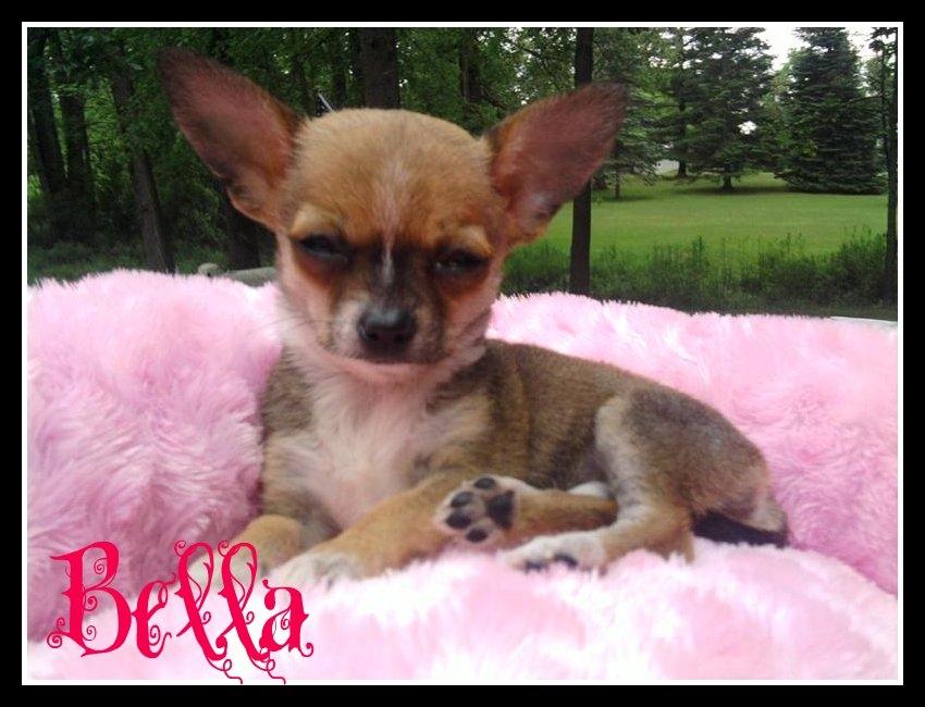 Bella-Tic Tac and Chalupa's