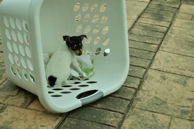 Nessa/Beamer pup