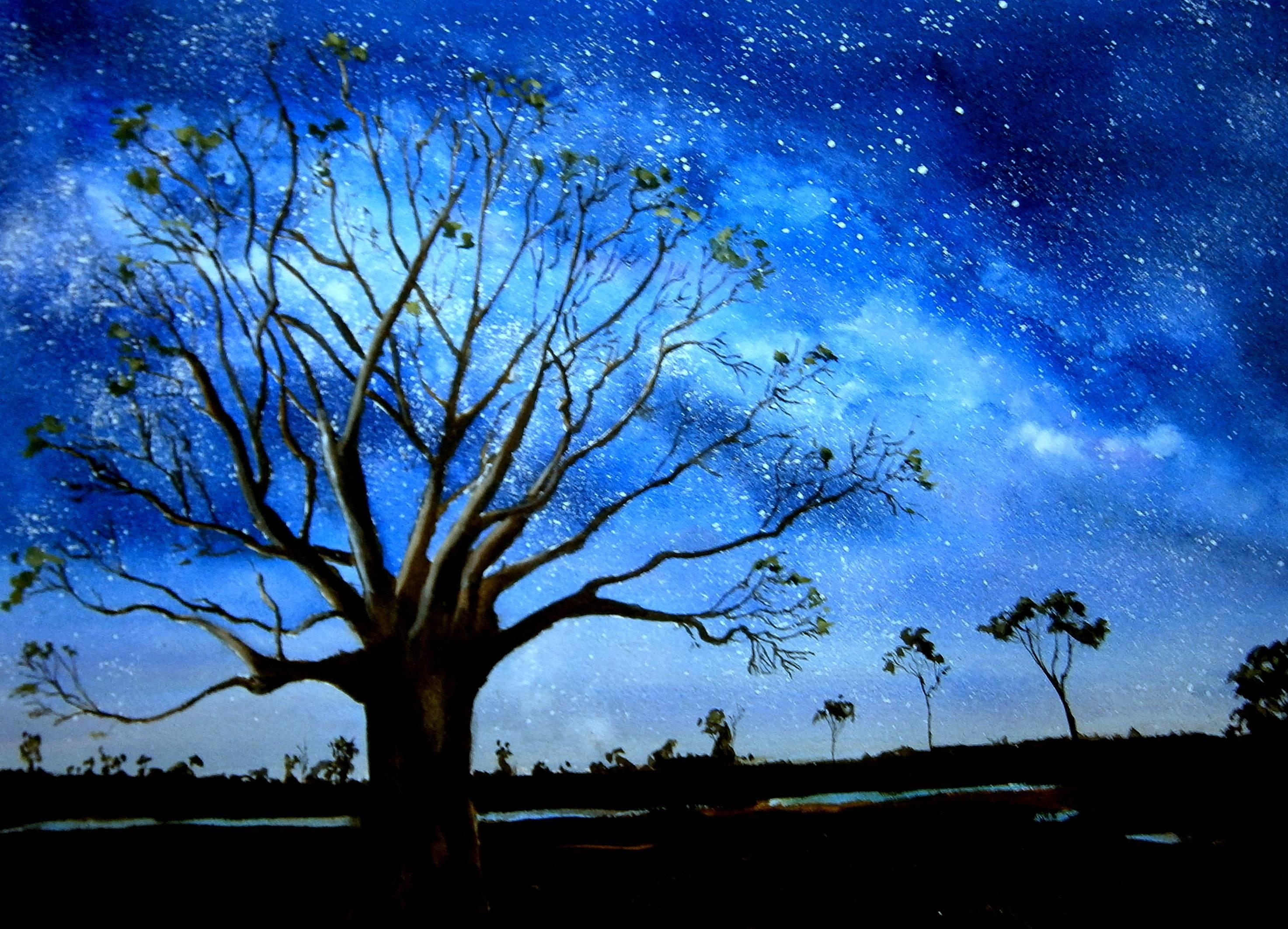 Starry night Boab