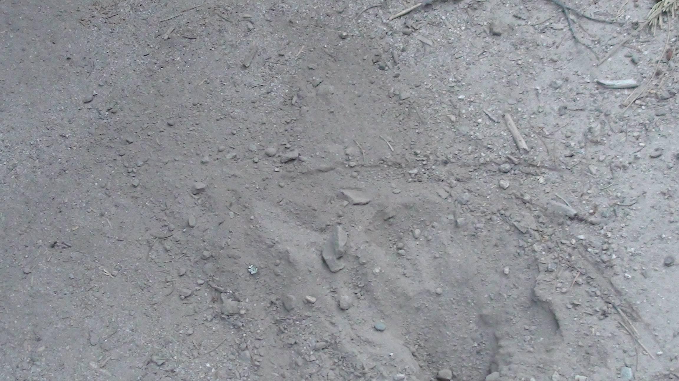 Sasquatch Investigation August 2016