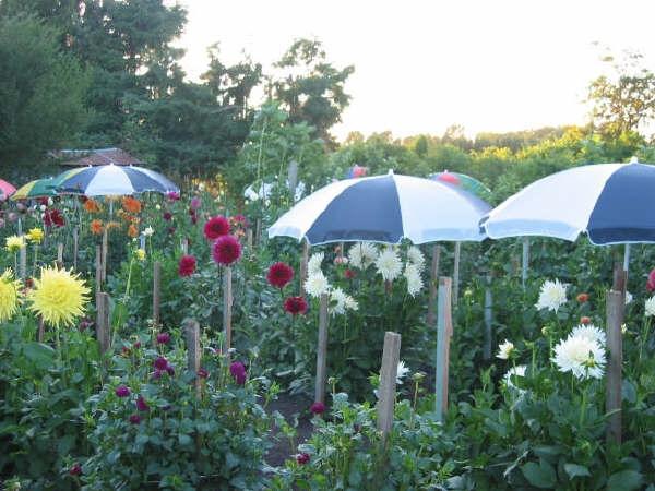 Paul & Cheryl Howard's Garden