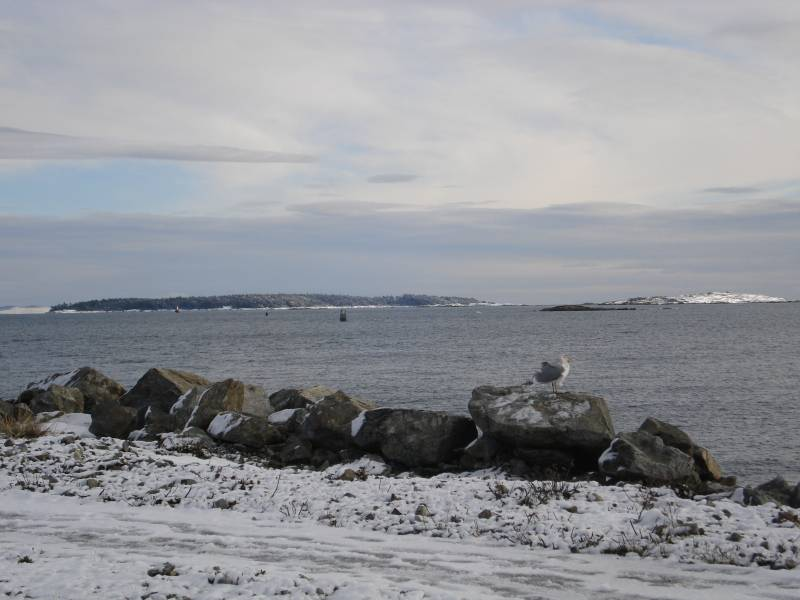 Discovery Island in the snow from the oak bay marina.