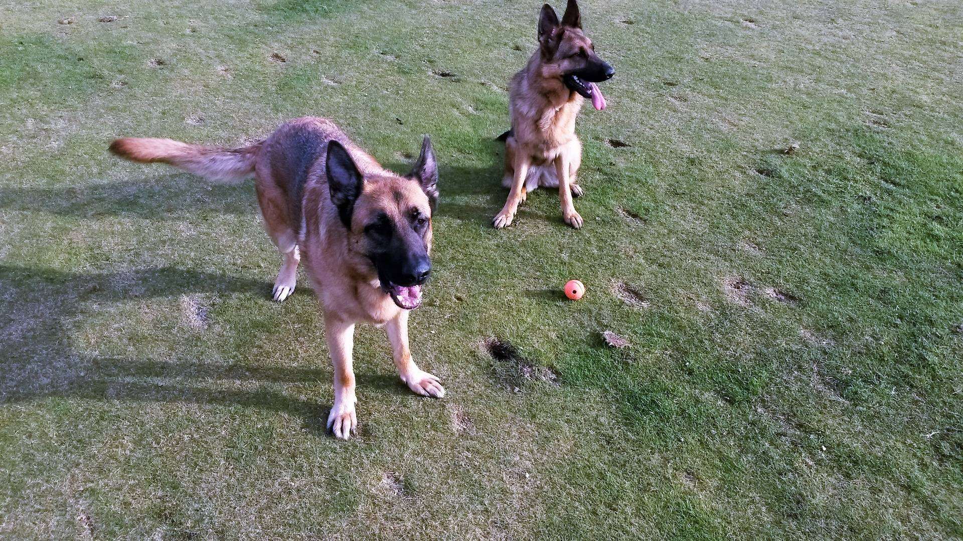 Oscar with Maia