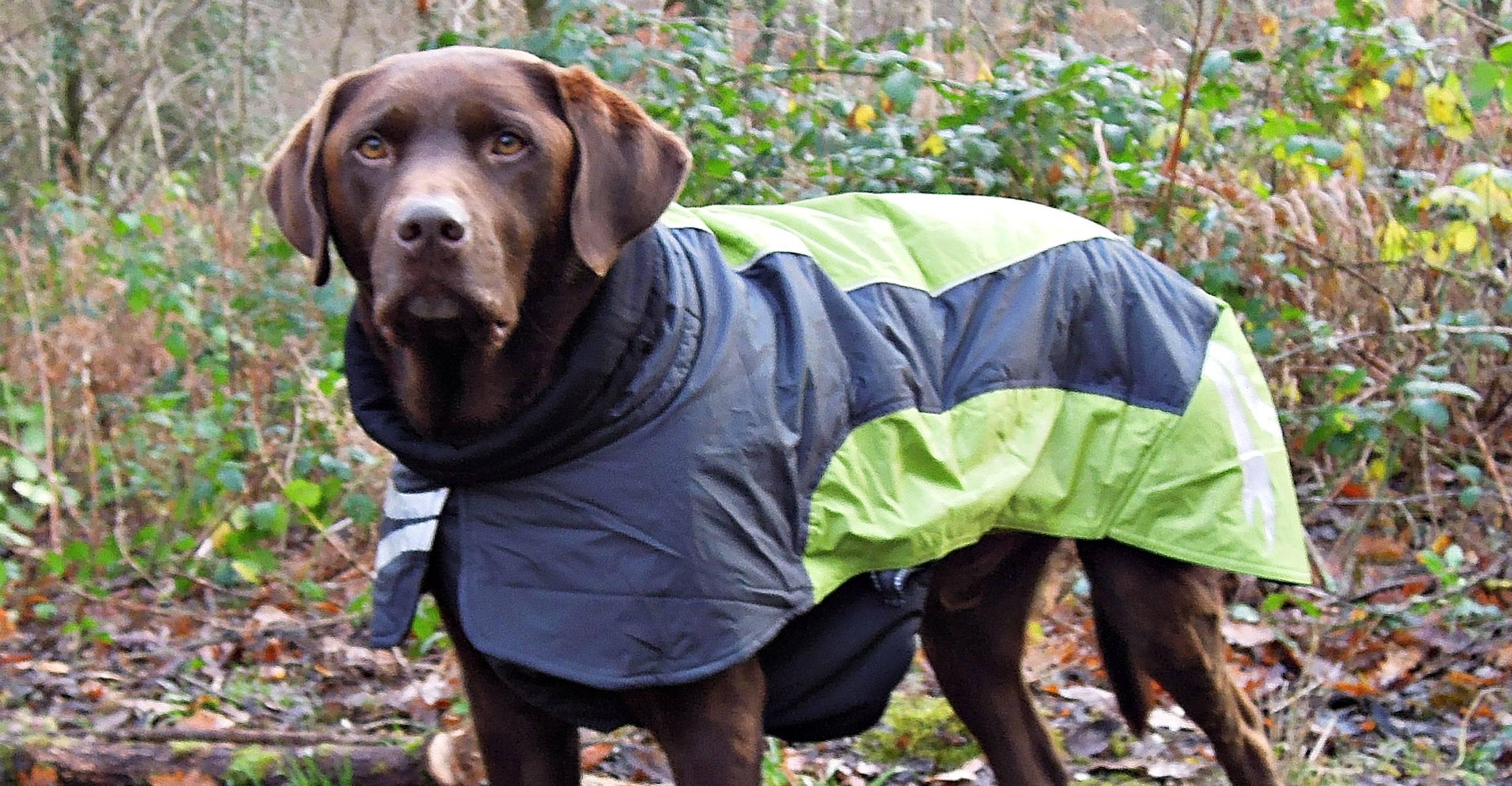 Harpo in his AMAZING Ultimate Warmer coat