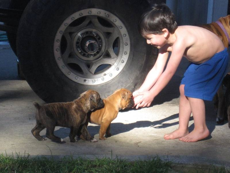 Our son and the pups