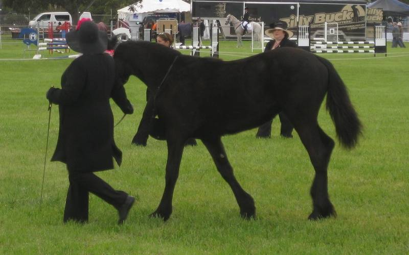Bellize placing 2nd Geelong Royal 09