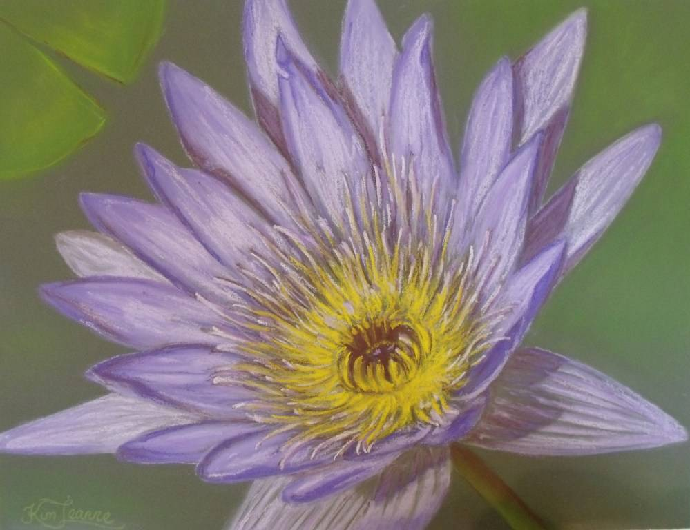 WATERLILY STUDY
