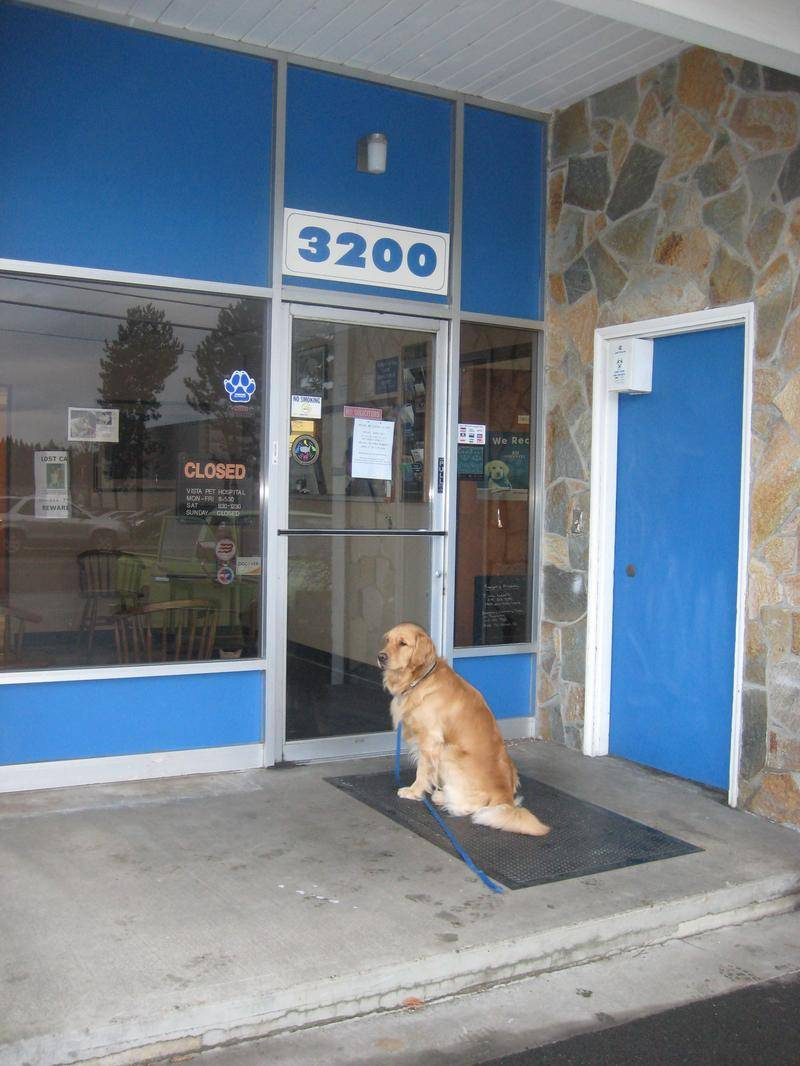 At the vet! Hey, let us in!