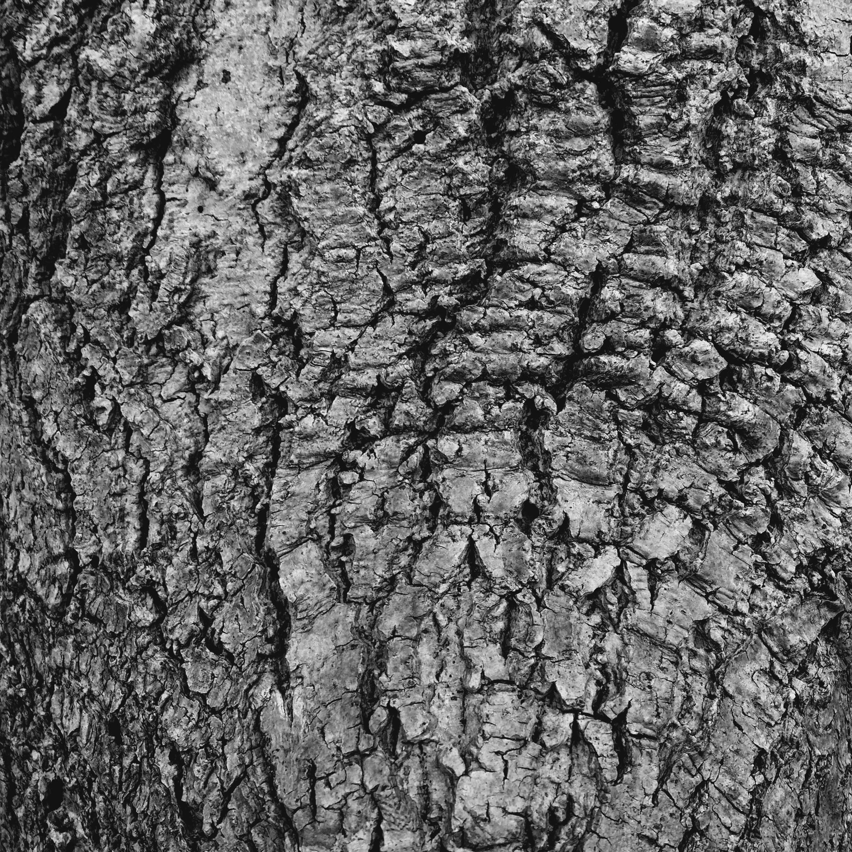 Elm Park B/W abstract photograph