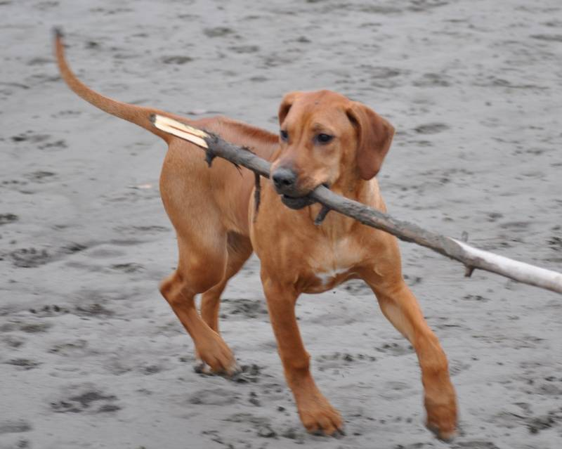 Luna with stick