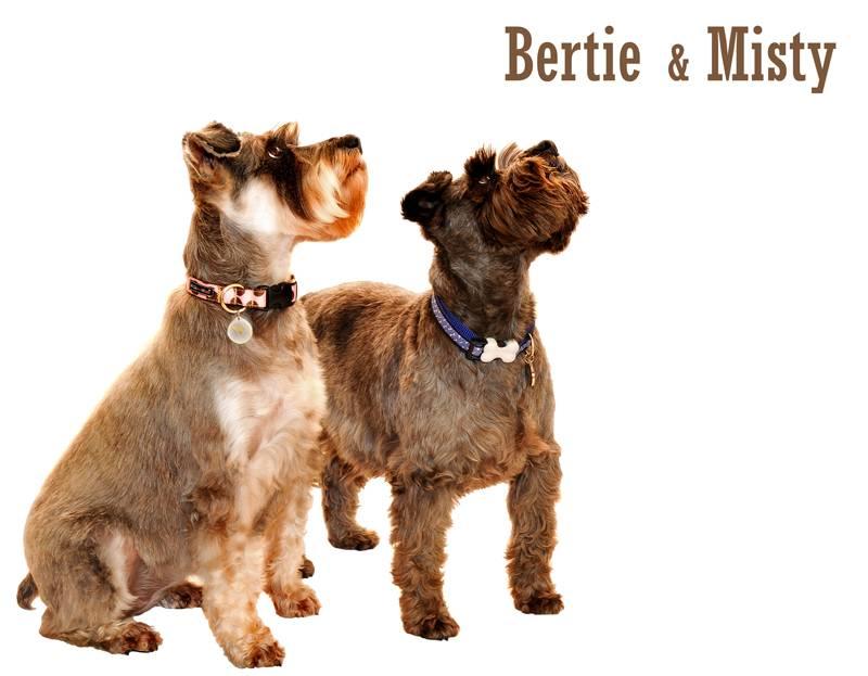 Bertie & Misty