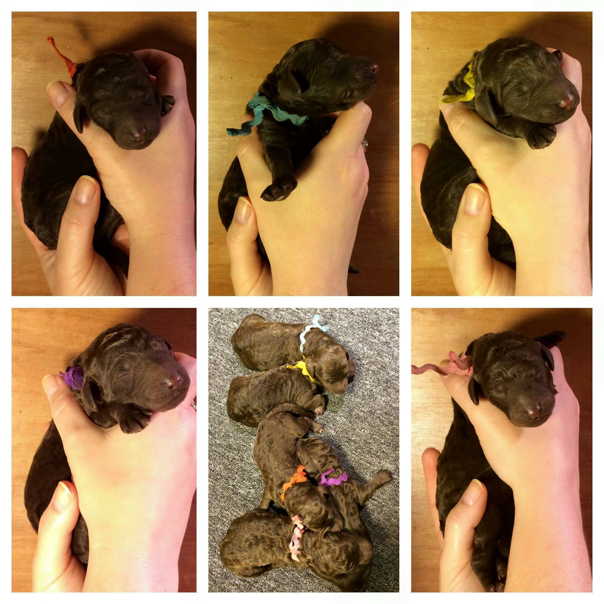 The puppies are now 24 hours old