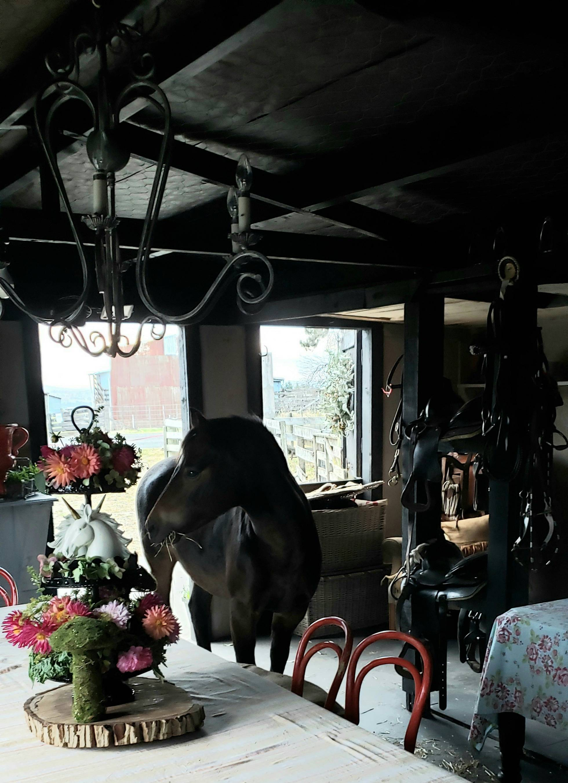 Dakota in the Party Barn