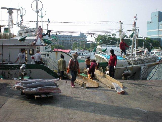 BLUE SHARK HGT DWT BELLY OFF
