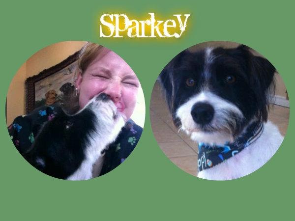 Sparkey