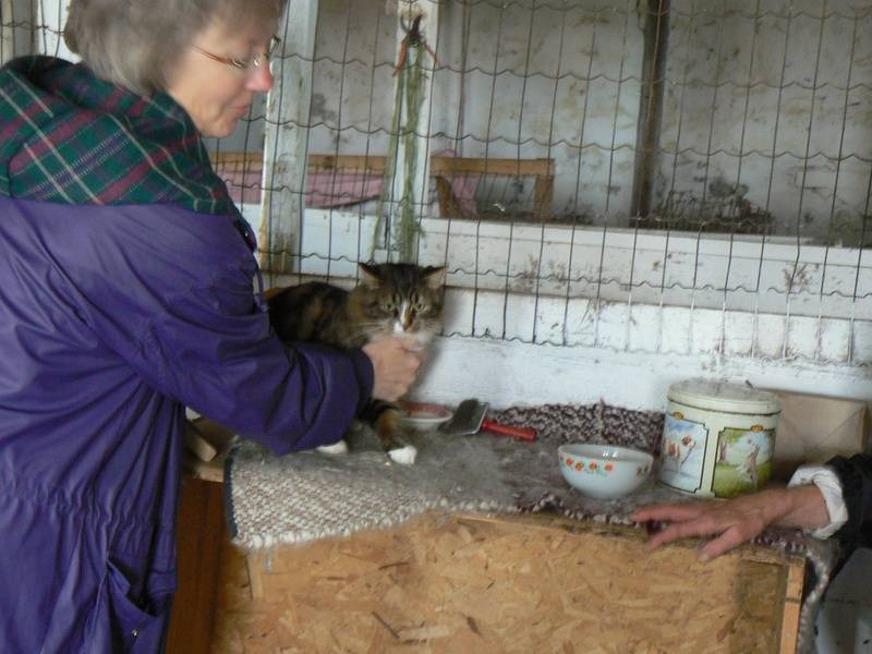 Abby the cat receiving an Animal Reiki session.