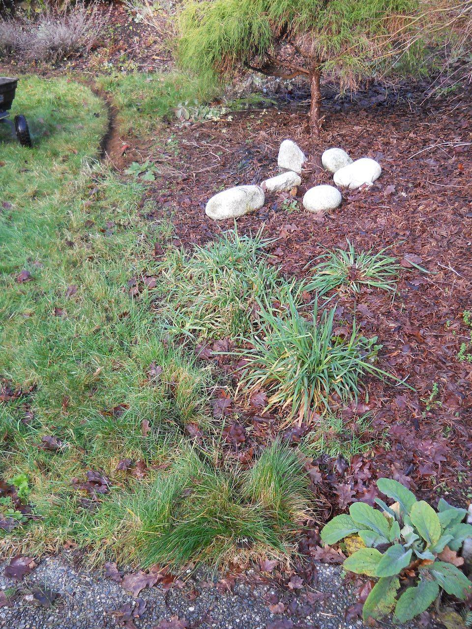 Before Lawn Edging