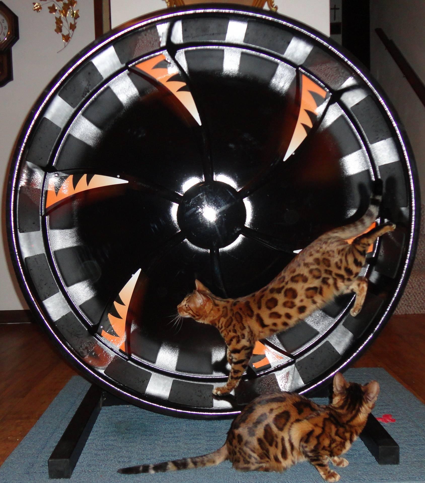 DA CAT ON THE WHEEL GOES ROUND N ROUND...