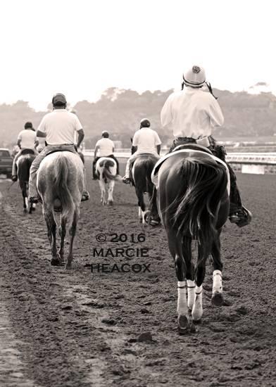 Ponies go to Work