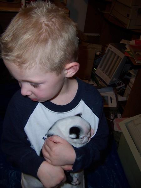 Lane & Boston Puppy