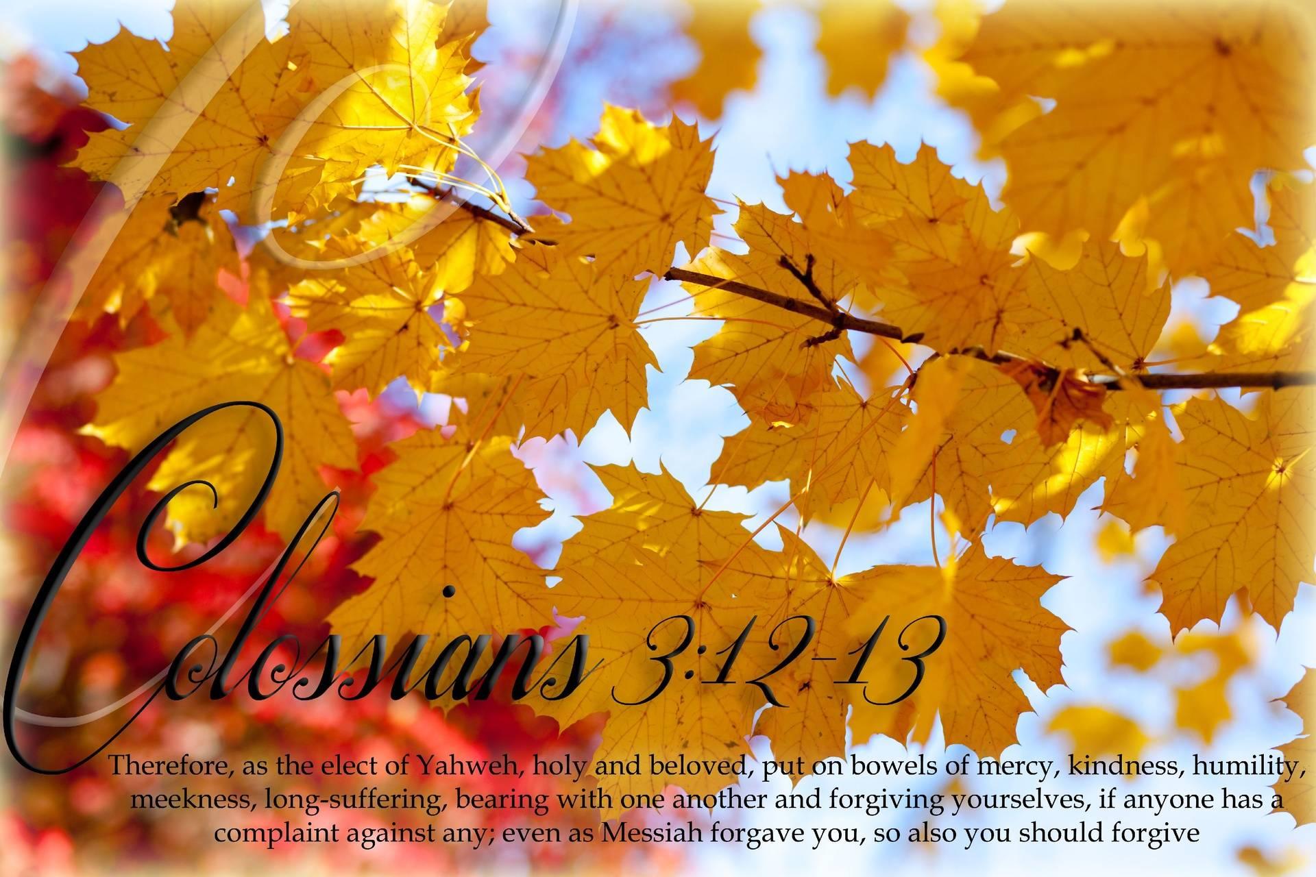 Colossians 3:12-13
