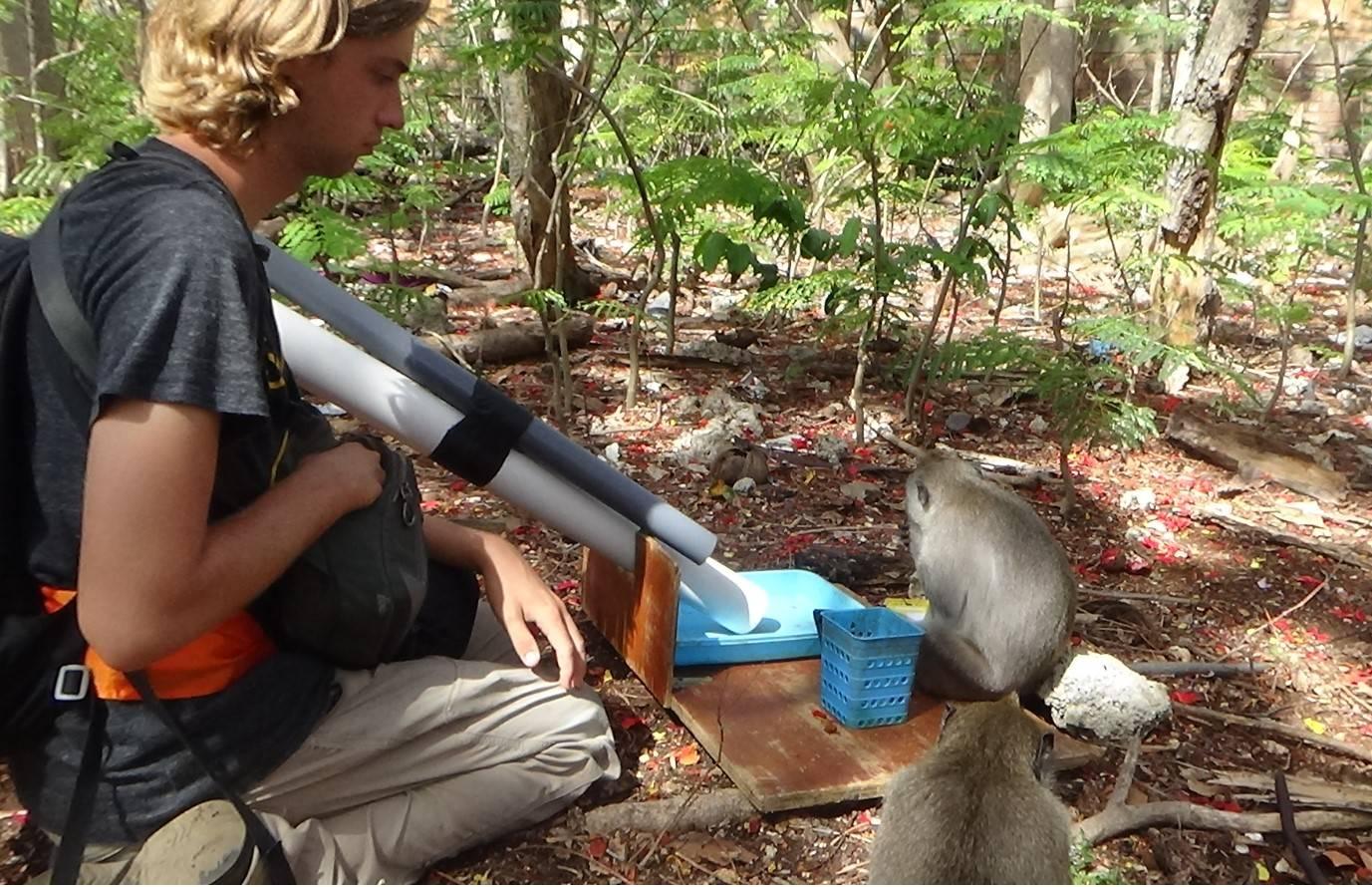 Caleb Bunselmeyer experimentally inducing bartering in a long-tailed macaque (Uluwatu, Bali, Nov. 2019)