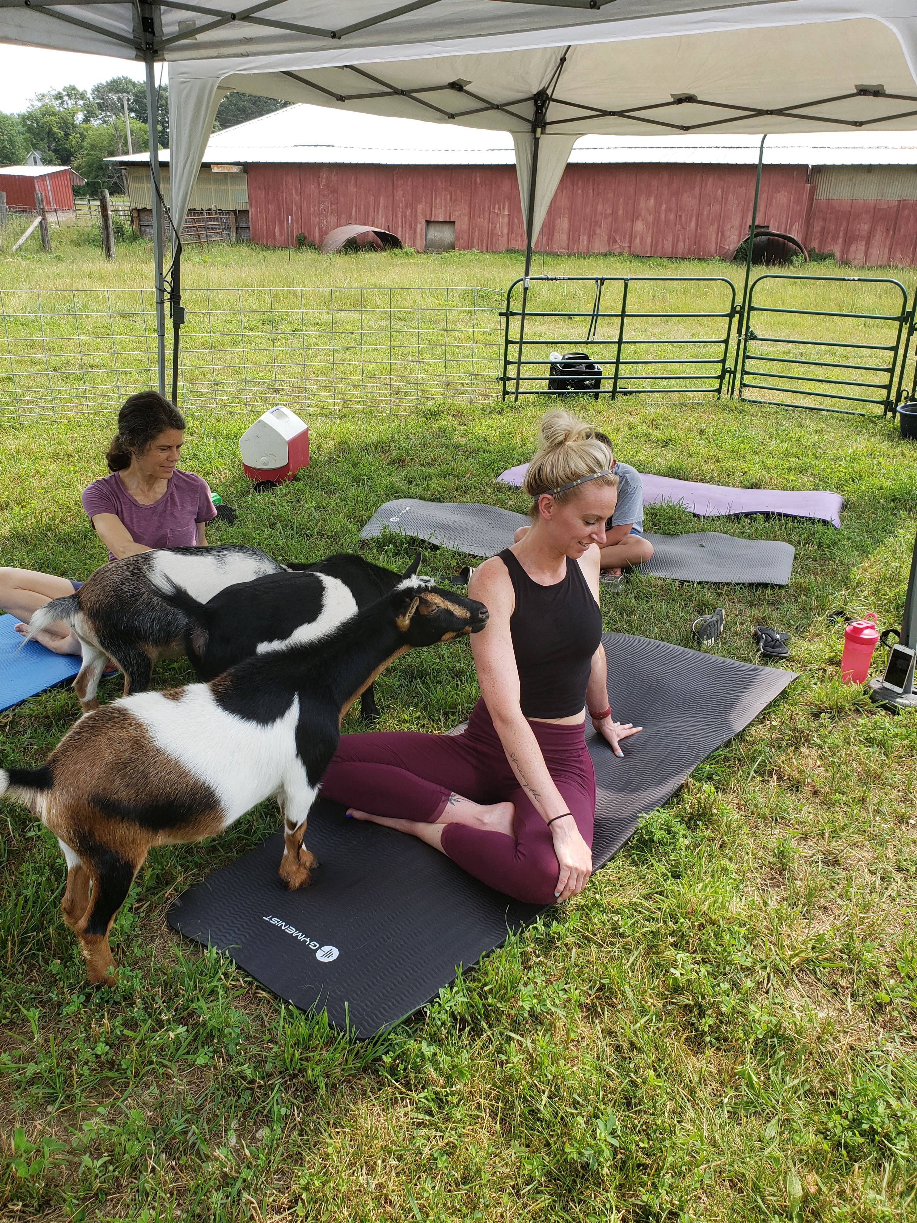 Outdoor Goat Yoga is the best