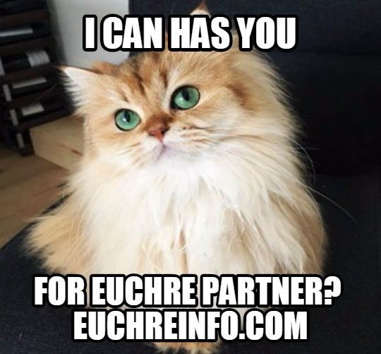 I can has you for Euchre partner?