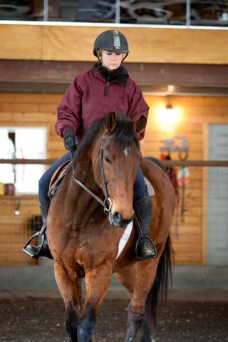 Cody under saddle ridden by Miffa Terry