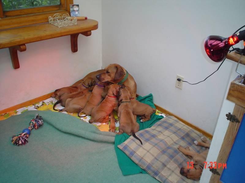 Summer and Ashas' pups