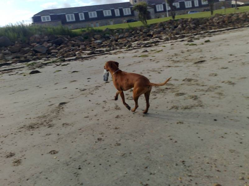 Strutting away with a plastic bottle found on the beach