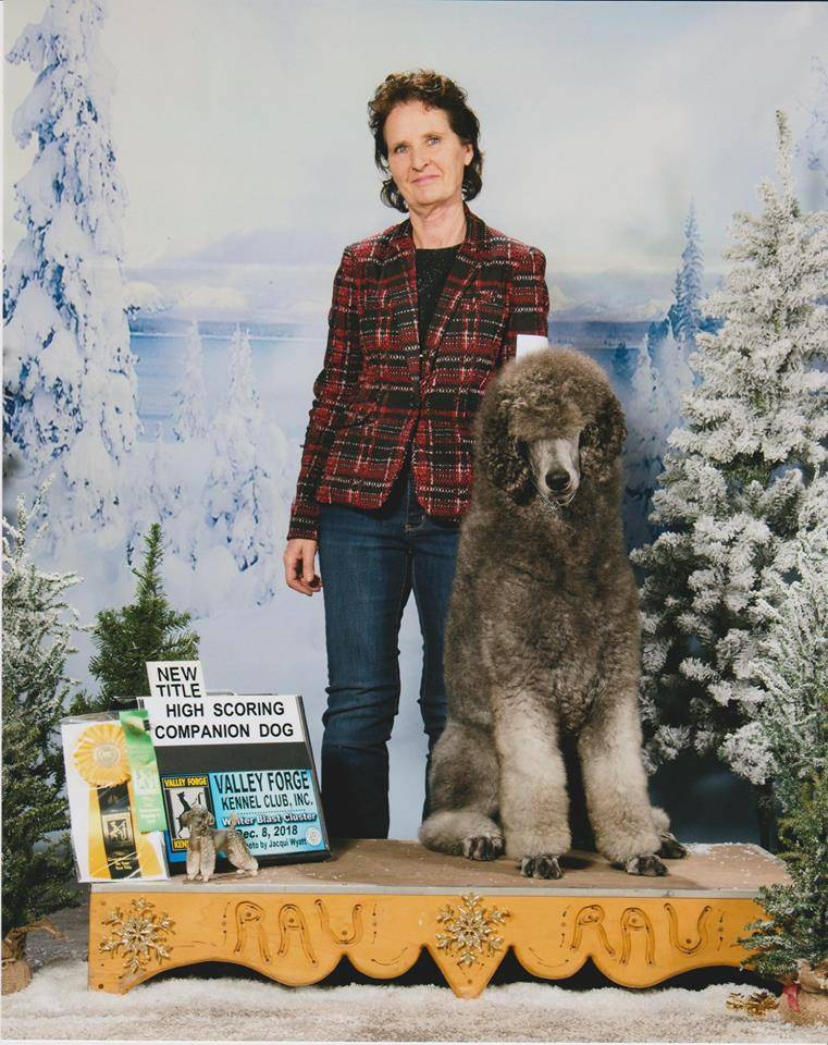 Javier High scoring Poodle & New title - Companion Dog (CD)