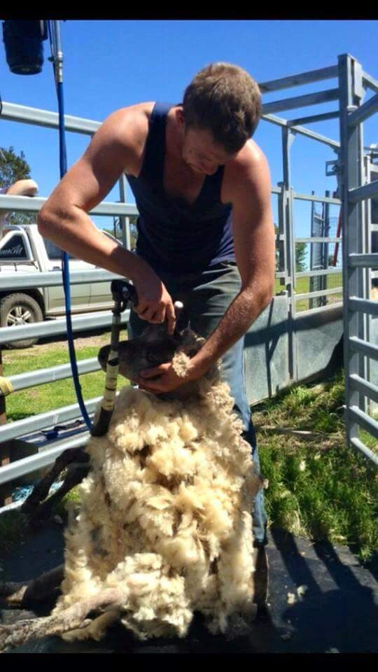 Irrawang High School Shearing Demo/Lessons 2014