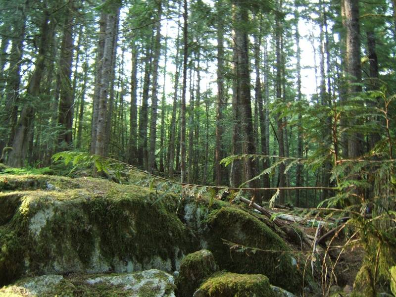 Sacred Forest 1
