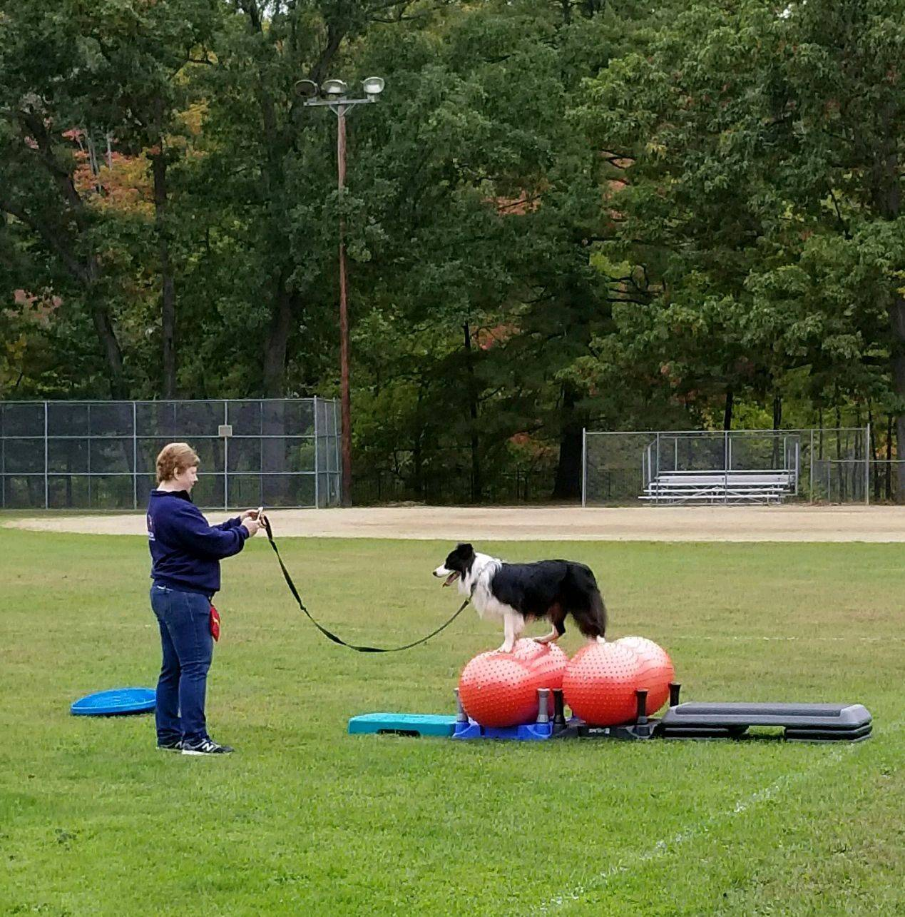 Jolly Dogs Fit PAWS Demo