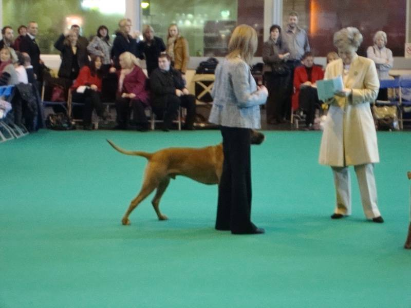 Floyd & Gill in line up at crufts