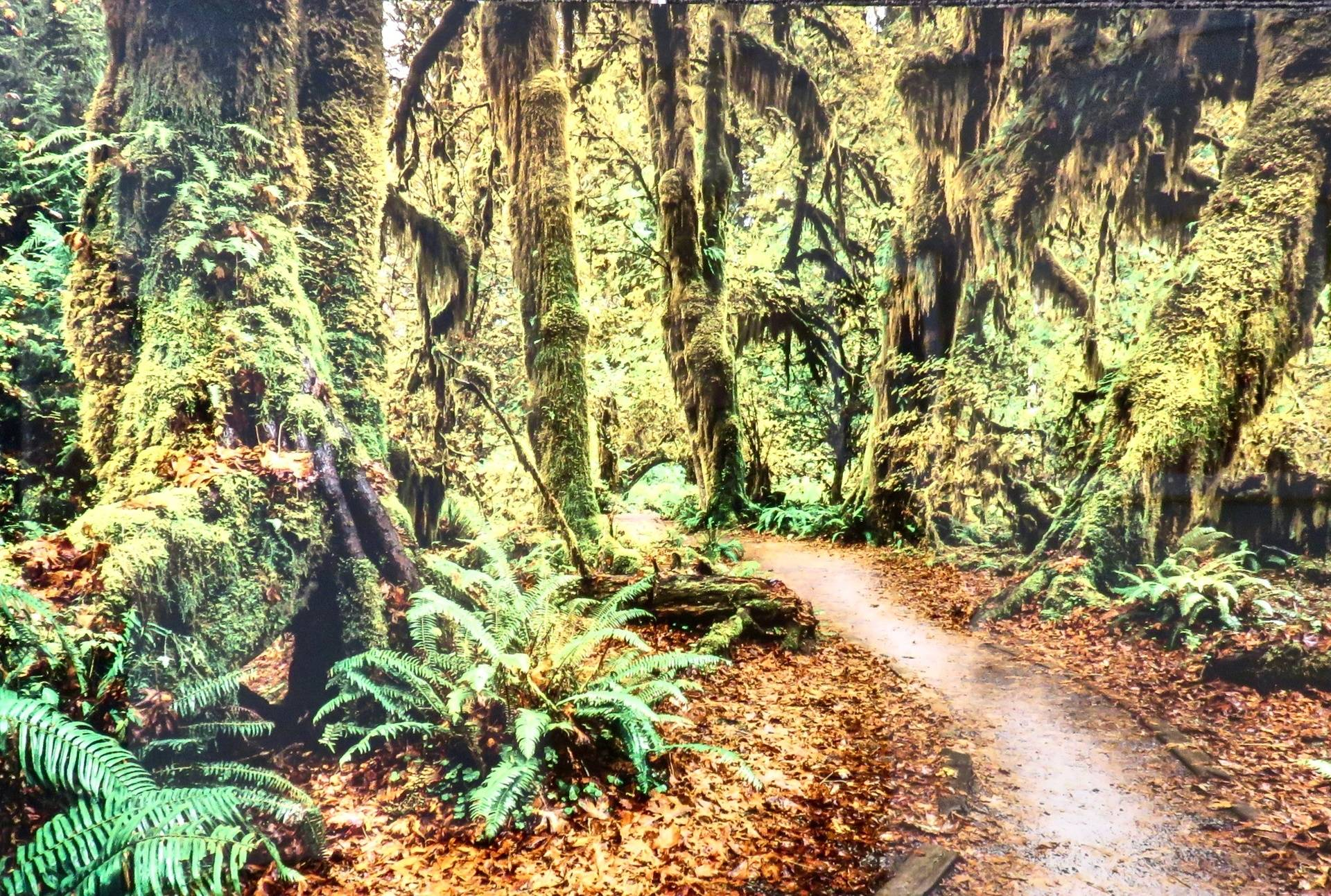Pathway to Rain Forest