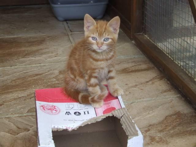 Penny's kittens