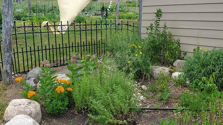 Rain Garden in development