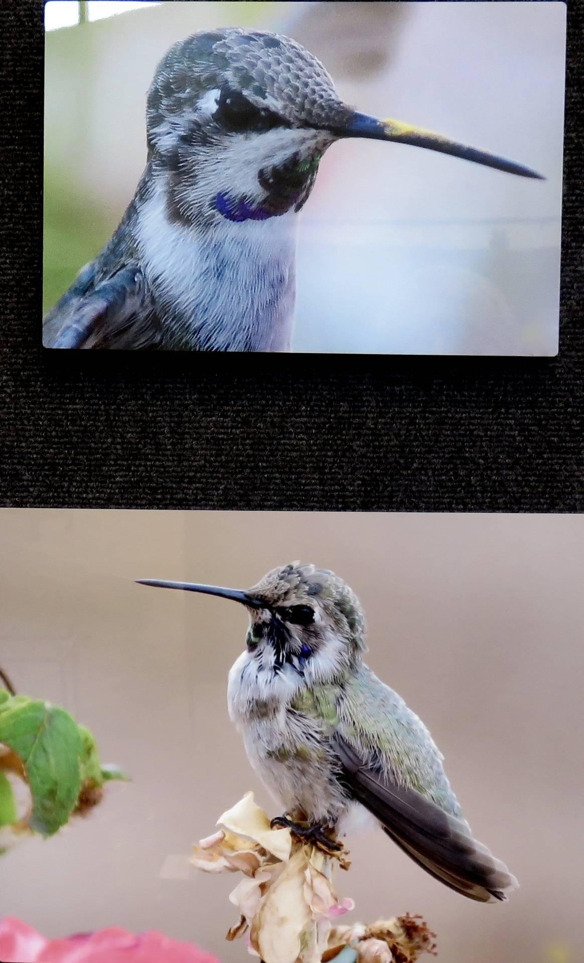 Scruffy and Pollinator